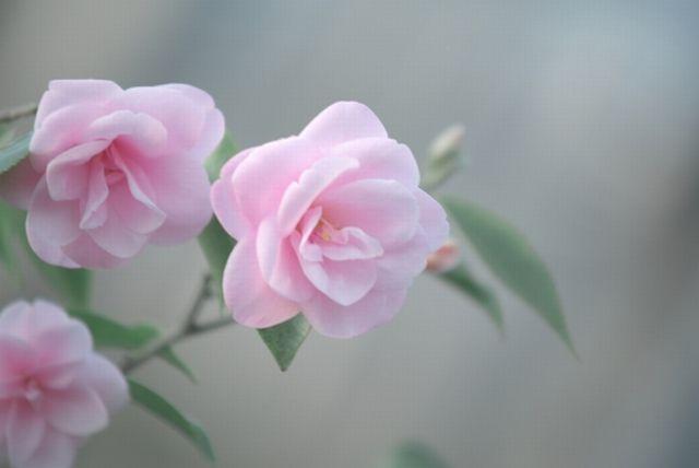 奥ゆかしさは慈愛を生み出す~察しの文化の日本ならではの美徳