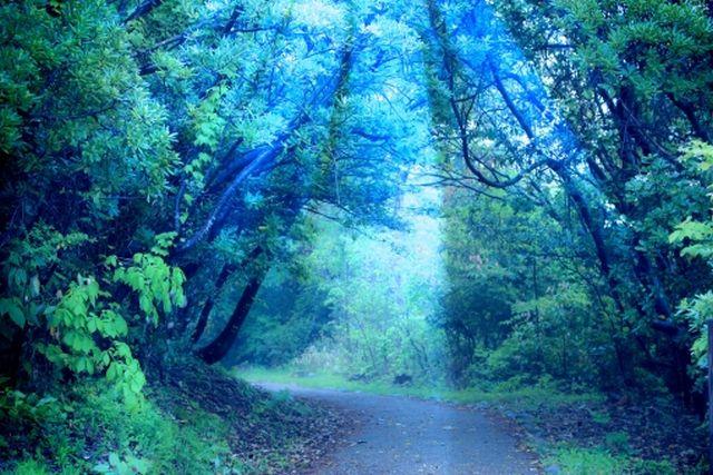 霊の影響・霊障(低層アストラル界からの影響)はあるのか?~ネガティブな心の様が悪い霊をも引き寄せる