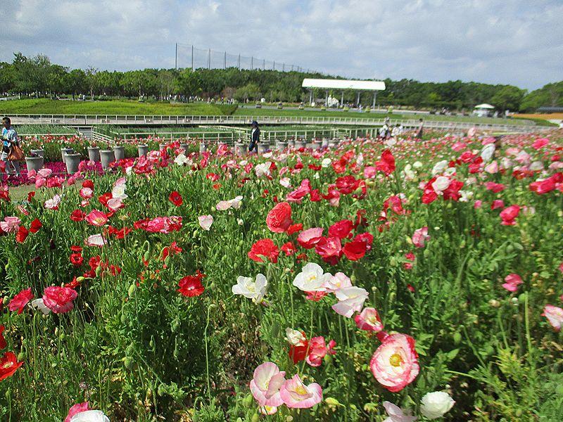 浜名湖ガーデンパークへ行ってきた~薔薇の季節