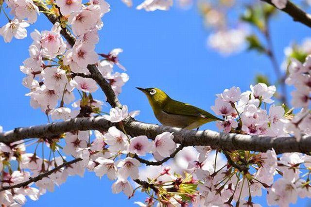 日本のナショナリズム・愛国心は健全なメンタリティ
