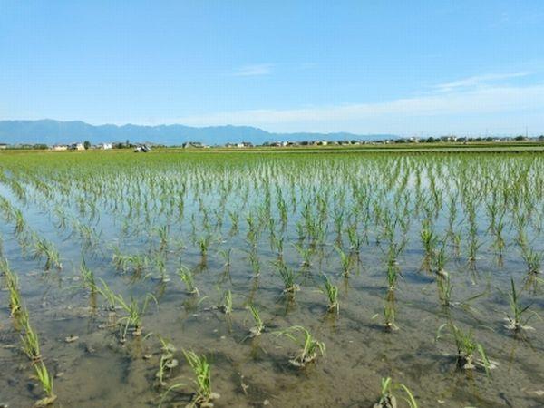 山本コウタローさんの不耕起自然農法は木村秋則さんと同じ
