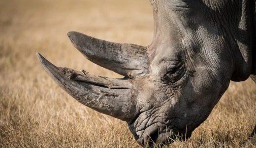 犀の角(スッタニパータ)は阿羅漢とインド人向けの言葉