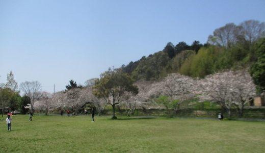 桜の花見の穴場を見つけた