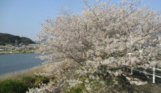 コロナ禍の桜の花見